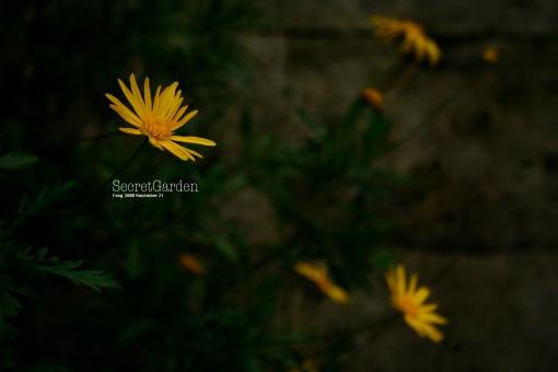 secret-garden-2-1